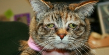 ทัคเกอร์ แมวพเนจรไร้บ้าน ที่หน้าเศร้าหมองที่สุดในโลก