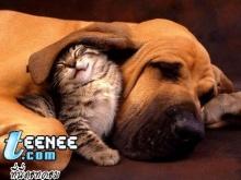 หมา-แมว น่ารัก