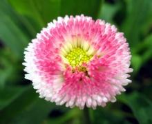 ดอกไม้สวยๆ★