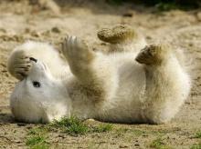 ♥ น้องหมีน่ารักจัง ♥