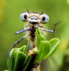 แมลงที่หน้าเหมือนเอเลี่ยนที่สุด