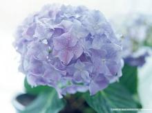 ดอกไม้สีม่วงจ้า