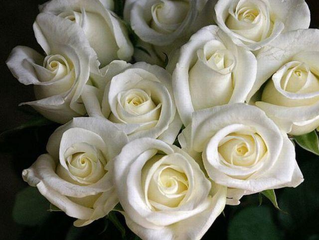 กุหลาบสีขาว หมายถึง ความมีเสน่ห์ ความบริสุทธิ์ มิตรภาพ และความสงบเงียบ นำโชคให้แก่ผู้รับเช่นเดียวกับกุหลาบแดง