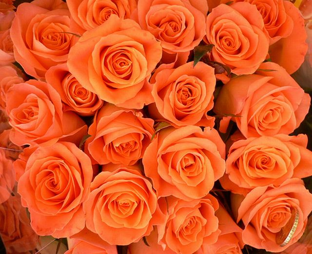 กุหลาบสีส้ม หมายถึง ฉันรักเธอเหมือนเดิม