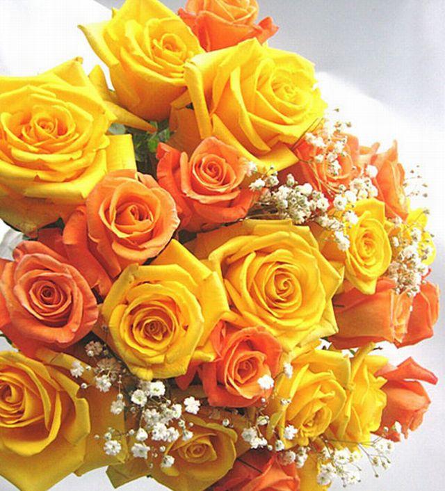 กุหลาบสีส้มกับสีเหลืองในช่อเดียวกัน หมายถึง ระลึกถึงด้วยความเสน่หา