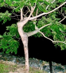 ต้นไม้แปลกๆ (saki)