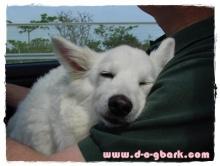 เมื่อหมานอนหลับ (อย่าไปกวนนะ)