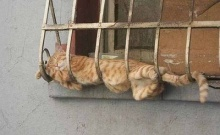 Cats can Sleep Anywhere