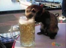 เฮฮา..ประสาสัตว์โลก....