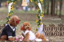 งานแต่งงานที่น่ารักที่สุดเลย^_^