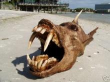 สัตว์ประหลาดแห่งท้องทะเล ชัวร์หรือมั่วนิ่ม