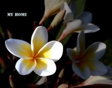 สีสัน สวยสด งดงามของดอกไม้