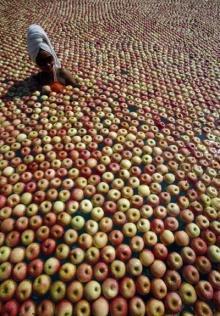 มาอาบผลแอปเปิ้ล...กันเถอะ!?