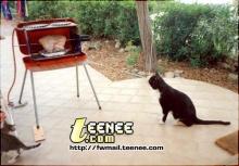 วันนี้ขอนำเสนอตู้อบรุ่นพิเศษ...ระบบแมวเฝ้าจ้า