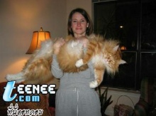 The Biggest Cats (MAINE COONS)