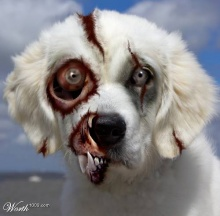Animal Zombies!!!(saki)