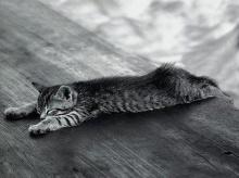 Cat Cat ^___^