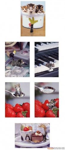 แมวแคระน้อยน่ารัก เคยเห็นกันหรือยัง