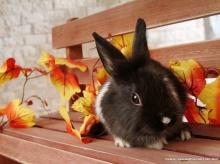 น้องกระต่ายแบ๊ว!!!..