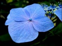 ดอกไม้สีม่วง & ดอกไม้สีฟ้า...