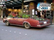 รถต้นไม้..เคยเห็นเปล่า!!