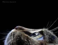 สัตว์โลก....แสนน่ารัก!?