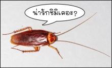 แมลงสาบ ผายลม ทำโลกร้อน
