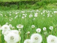 ดอกหญ้า..ใครว่าไร้ความงาม...