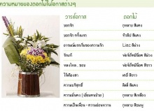 ความหมายของการให้ดอกไม้  ^___^