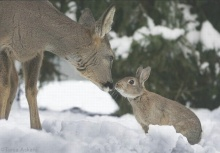 'Bambi & Thumper' ในโลกความจริง