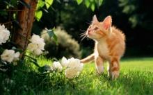 - น้องแมวน่ารัก -