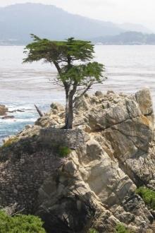 10 สุดยอดต้นไม้มหัศจรรย์ที่สุดในโลก!!