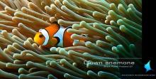 ธรรมชาติใต้น้ำที่เกาะพีพี