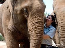 รูปช้างไทย ก่อนหายไปในความทรงจำ!!