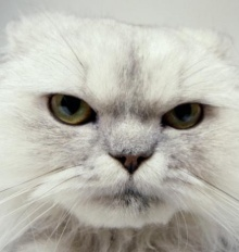 แมวน้อย เริงร่า น่ารักมั้ย???