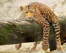สัตว์โลก....แสนน่ารัก2!?