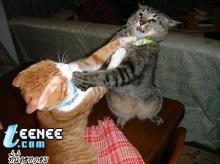 ฮาๆขำๆกับสรรพสัตว์!!!