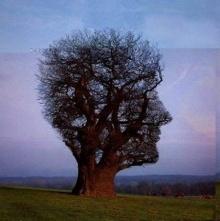 ต้นไม้แปลกๆ ★