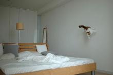 Jumping Cat~