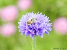ผ.ผึ้ง (ทำรัง) Bee & Flowers....