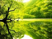 - Green & Life -