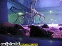 Biggest Crab~ปูที่ตัวใหญ่ที่สุดในโลกWow~~