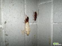 โอ้วว!ก๊อด แมลงสาปลอกคราบเคยเห็นกันมั้ย??