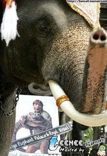 ช้างไทยอาลัยเออร์วิน!!