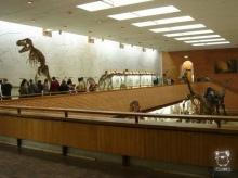Paleontological Museum