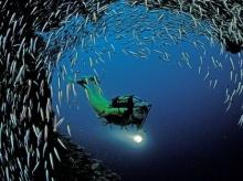 ♣ ป.ปลานั้นหายาก ♣