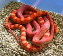 ♠ งอ.งู น่ากลัวเนอะ ♠