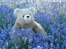 น้องหมี...Teddy Bear