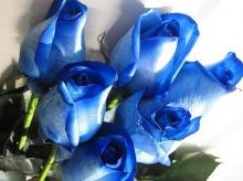 ♣ ดอกไม้สวยๆให้คุณ ♣