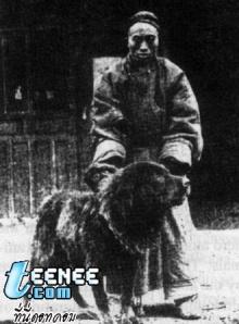 มาดูสุนัขพันธ์ tibetan mastiff กัน